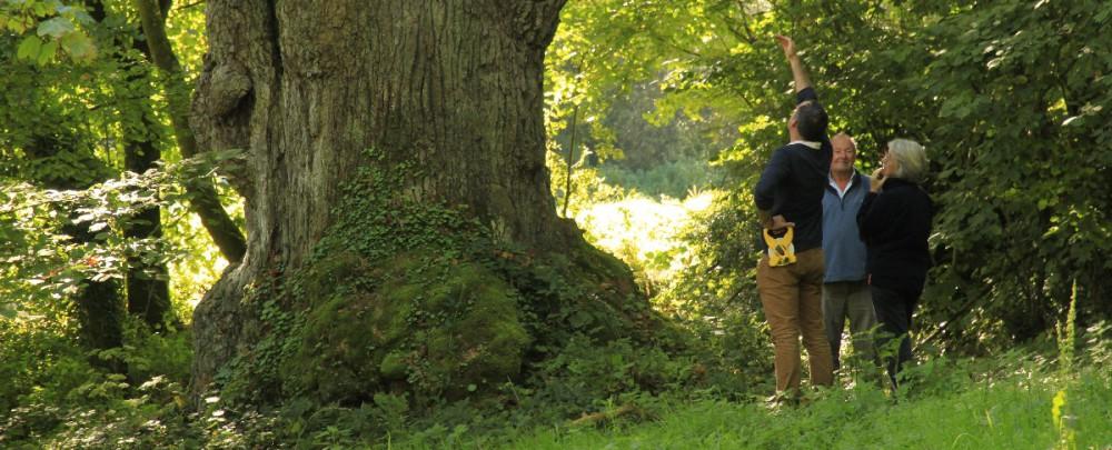 attaché caoutchouc pour arbre