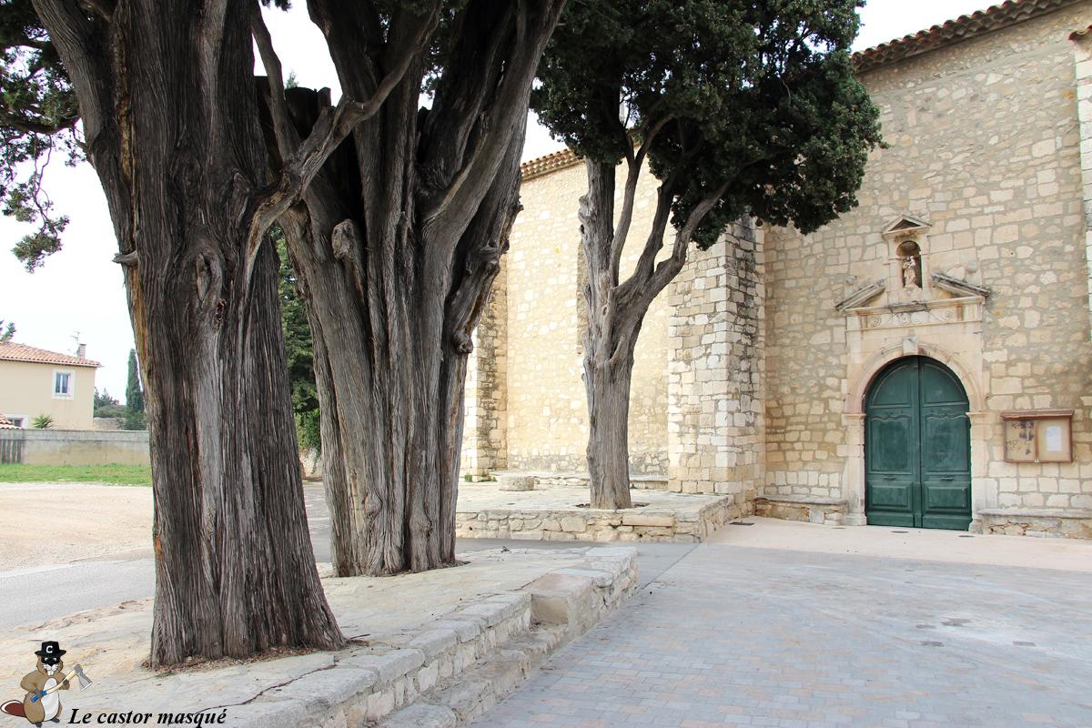 cyprès-commun-caderot-berre03