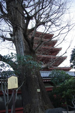 gingkos-du-temple-Sensö-Ji-Tokyo-Japon-Rémy-Canavesio (2)
