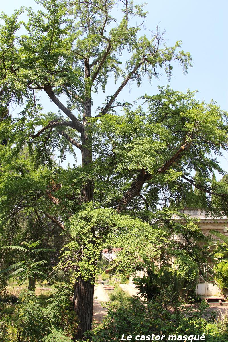 Suite De La Visite Du Jardin Des Plantes De Montpellier Les
