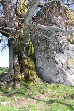hetre-rocher-chambon-sur-lac91