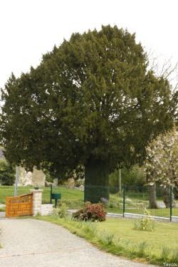 if de la ville maze, Sévignac, Côtes d'Armor, Yannick Morhan (8)