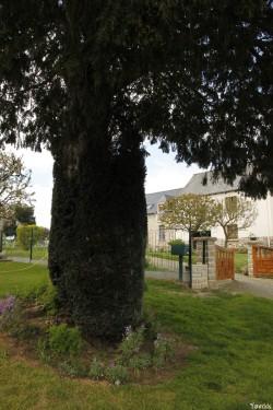 if de la ville maze, Sévignac, Côtes d'Armor, Yannick Morhan (9)