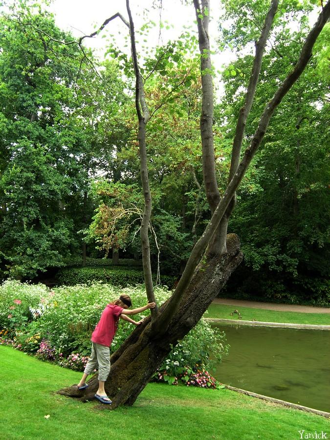 jardin Dumaine - arbre de judée © ҮĦnicК