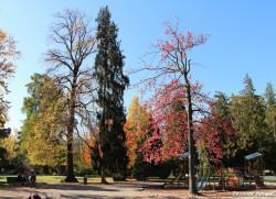 jardin-plantes-gre-automne