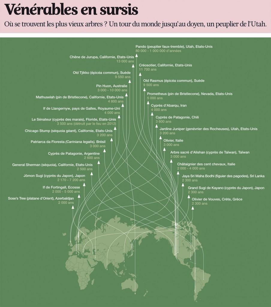 la-carte-des-plus-vieux-arbres-du-monde