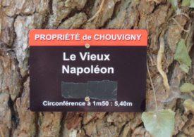 le-vieux-napoleon-012