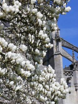 magnolia Dinan redim2