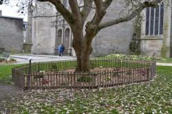magnolia Dinan suite redim 2