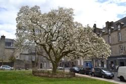 magnolia Dinan suite redim