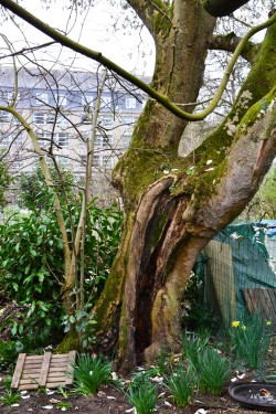magnolia rueAB redim (2)