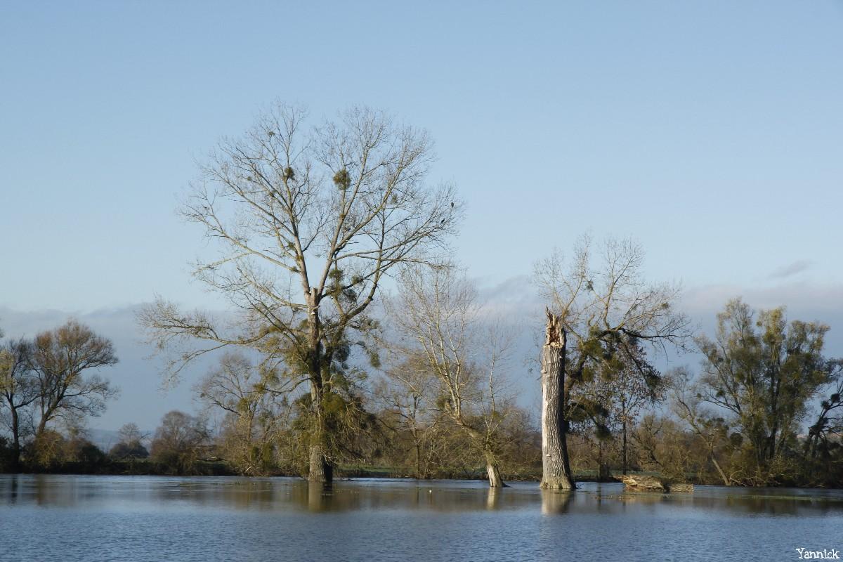 peupliers noirs, Bras-sur-Meuse, Meuse, Yannick Morhan (1)