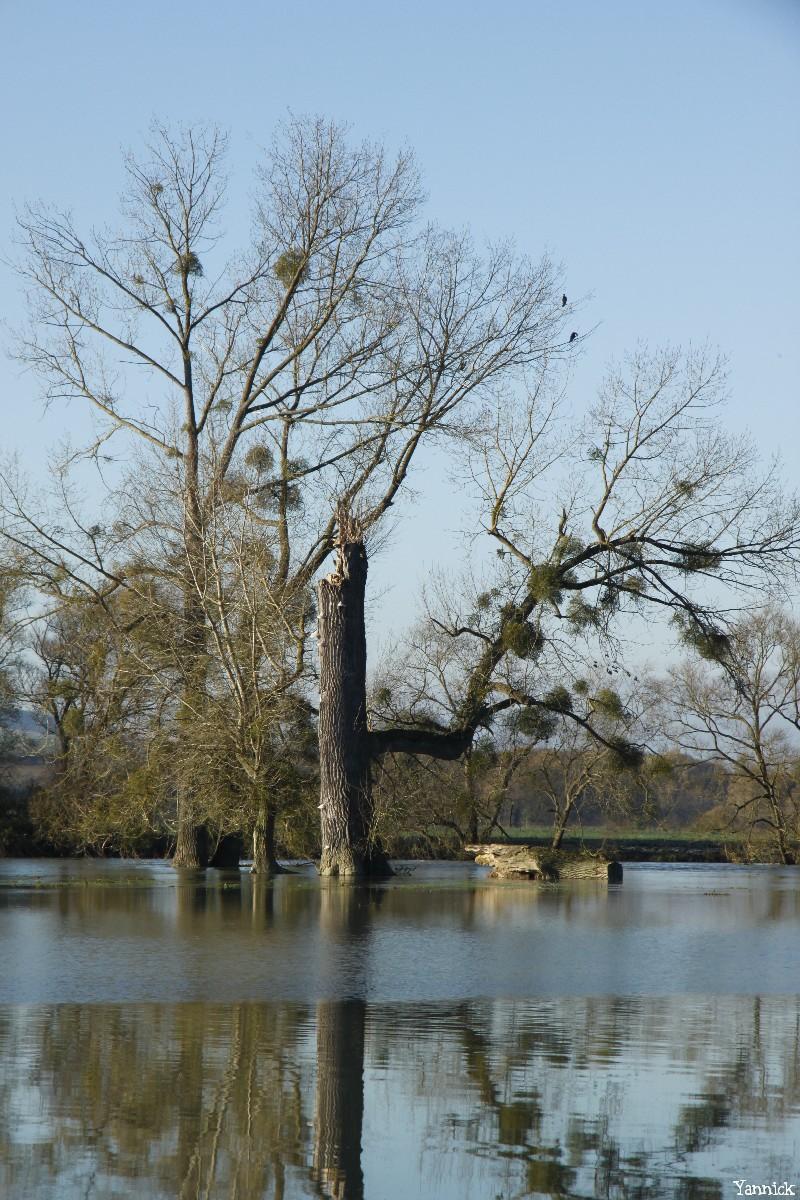 peupliers noirs, Bras-sur-Meuse, Meuse, Yannick Morhan (3)