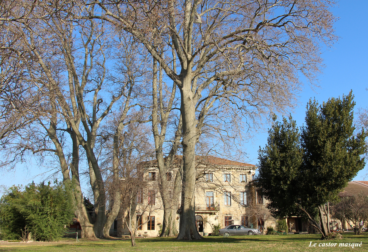 platane-chateau-bruyere-pont-st-esprit06