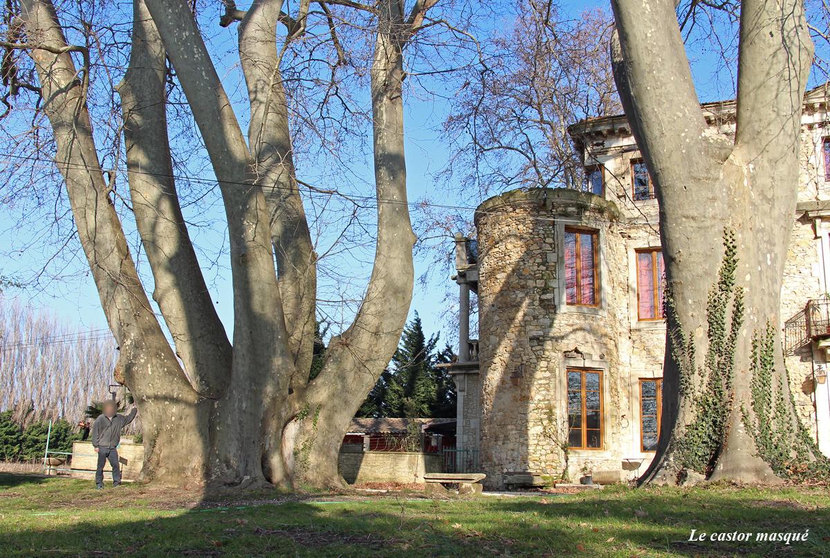 platane-chateau-bruyere-pont-st-esprit09