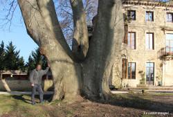 platane-chateau-bruyere-pont-st-esprit11