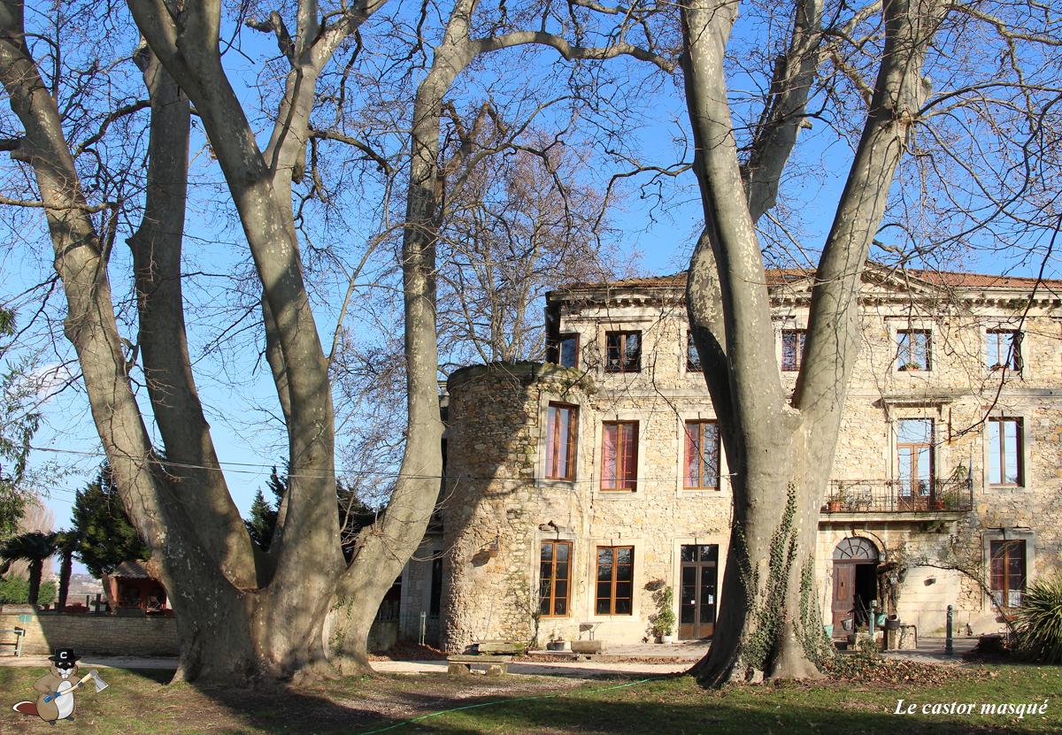platane-chateau-bruyere-pont-st-esprit12