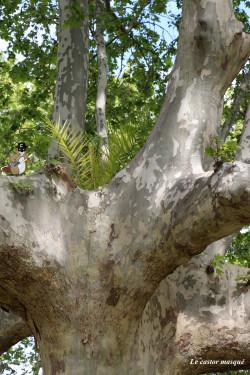 platane-palmier-perpignan2