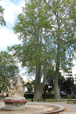 platane-trois-doigts-perpignan1
