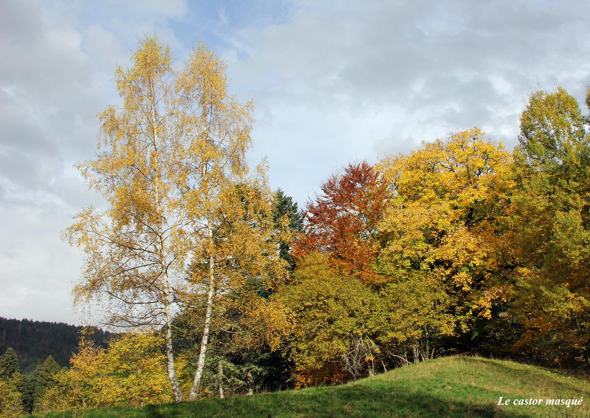 premol-automne3
