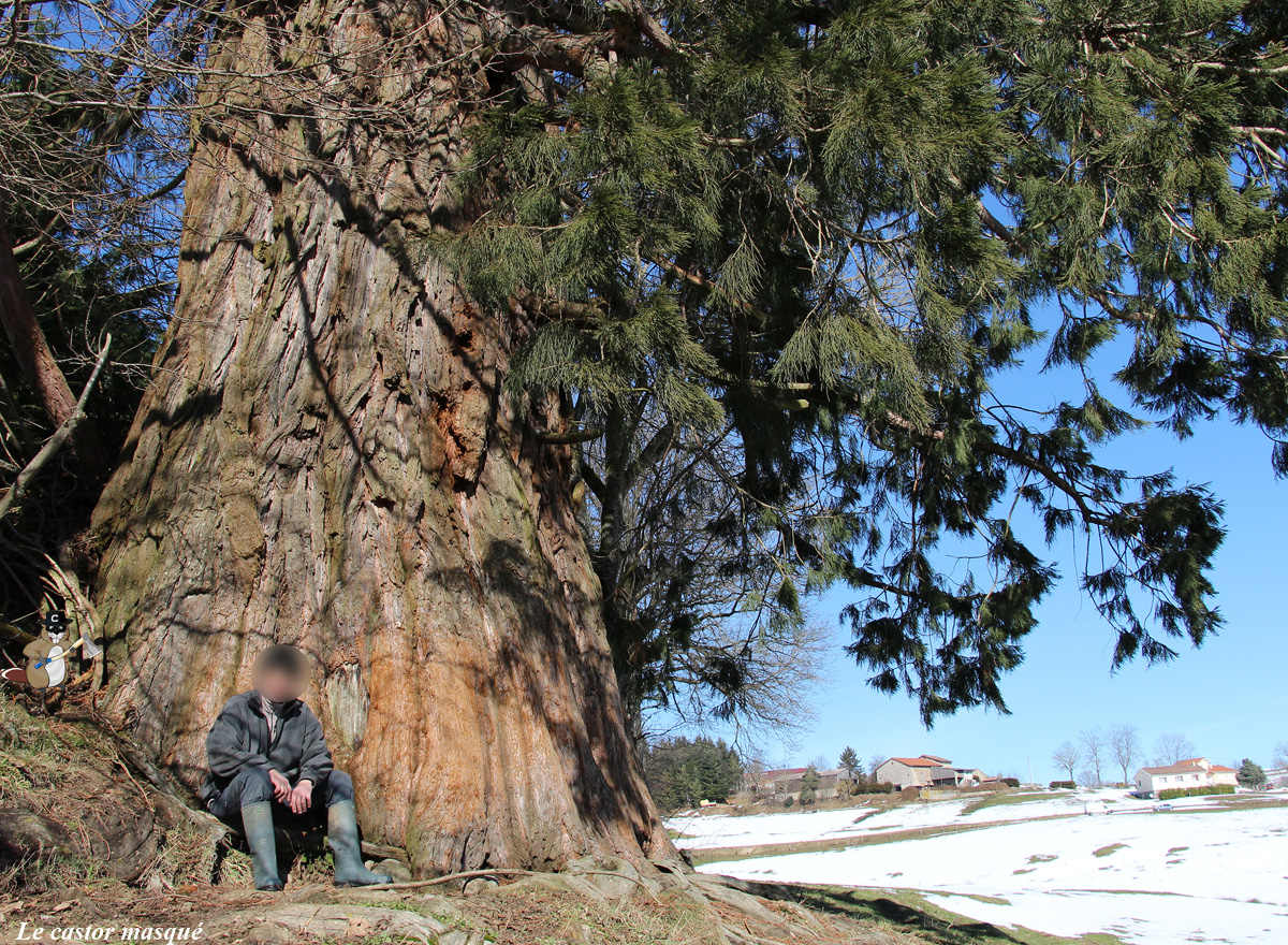 sequoia-geant-jonzieux91