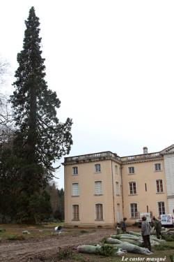 sequoia-geant-ronno2