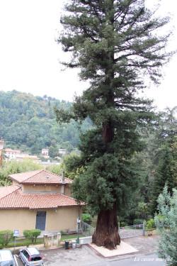 sequoia-sempervirens-vals-bains15
