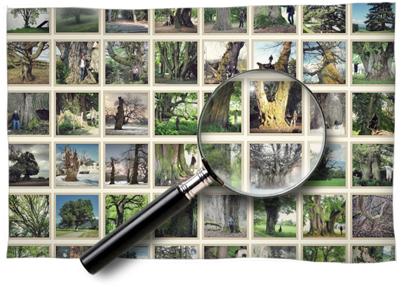 zoom-galerie-meristemes