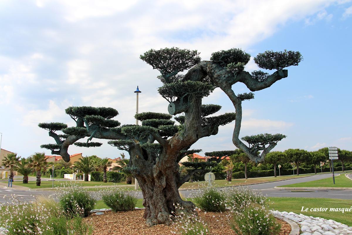 Taille D Un Olivier Comment Faire les oliviers bonsaïs de port-la-nouvelle, aude | les têtards