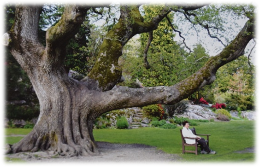 Source photo : Ancient and other veteran trees : further guidance on management - Ancient tree forum - David Londsale